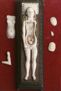 An ivory model of a pregnant woman used for teaching of medical students, around 1700